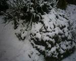 午後2時半の積雪