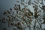 3月27日の木蓮の木