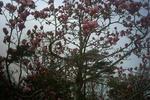 播磨中央公園の赤木蓮2