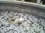 亀の彫刻(小)