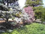 明石城の屋上庭園の花
