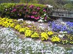 明石城の屋上庭園の花2