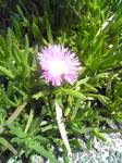 明石城の屋上庭園の何かの花