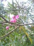 鈴が森神社の花