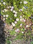 ガーデンテラスの花