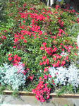 ガーデンテラスの花2