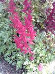 ガーデンテラスの花3