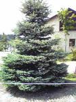 ガーデンテラスの木
