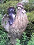 信楽の鶏&狸像