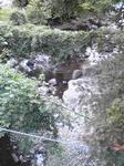 福知渓谷つり橋からの景色