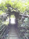 福知渓谷つり橋の蔓のアーチ