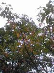 播磨中央公園紅葉始め