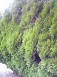 播磨中央公園の緑の木