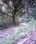 鏡ヶ岬灯台への道