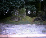 浦島神社境内の大木の根元