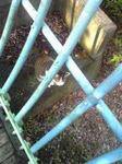 公園の捨て猫2