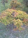 植え込みの木