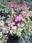 播磨中央公園の紅葉した葉