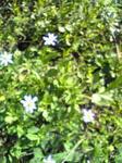 何かの草花