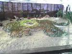 サボテンの植え込み