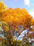 黄色く紅葉した木