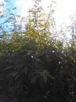 新芽が出た垣根