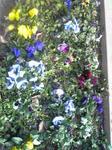 パンジーの花壇