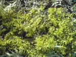 何かの植物