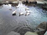 神崎農業公園のアヒル