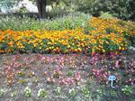 鳥取 花回廊の花壇