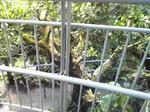 鳥取花回廊の温室の中