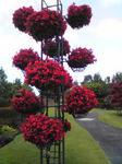 鳥取花回廊の花飾り