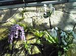 鳥取花回廊 フラワードーム内の石垣