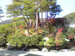 足立美術館庭園2