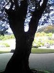 足立美術館庭園7