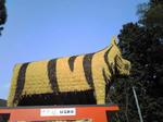 安志賀茂神社のトラ像1