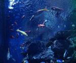 アクアスの水槽1