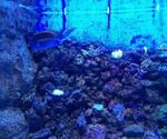 アクアスの水槽2