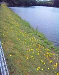 播磨中央公園池の畔