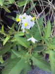 菖蒲園の草花