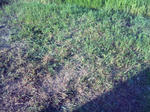 お墓の草刈1