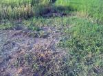 お墓の草刈2