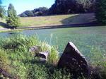 播磨中央公園・水草の池
