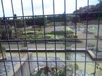 播磨中央公園のバラ園