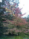 播磨中央公園の紅葉した木32