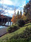 播磨中央公園のメタセコイヤの紅葉