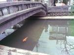城崎温泉街の河