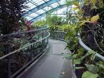 みとろフルーツパーク・温室内部1