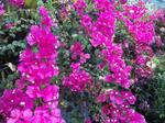 みとろフルーツパーク・温室の花