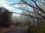 桜の園入口